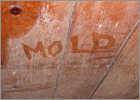 Home Mold Control AquaGuard Foundation Solutions