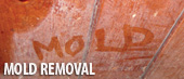 Indiana Foundation Service are the home mold experts!
