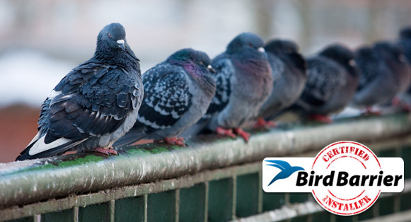 Bird Solutions by Cowleys Professional Bird Control Specialist in Connecticut, Delaware, New Jersey, New York & Pennsylvania.