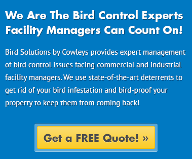Bird Solutions by Cowleys