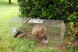 groundhog removal in mercer ocean monmouth middlesex