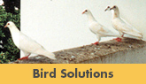 We Are Greater New Jersey Residential Bird Control Experts! - Learn More