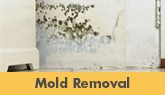 We Are New Jersey's Mold Removal Experts! - Learn More