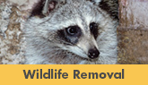 We Are Greater New Jersey Wildlife Removal Experts! - Learn More