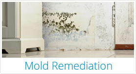 Mold Remidiation from The Property Medics