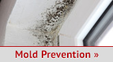 Mold prevention services