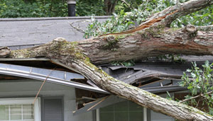 Storm damage in Massachusetts and Connecticut